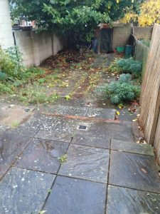 A plain blank garden with paving slabs and a big Laurel tree.