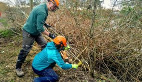 Volunteers cutting back brush