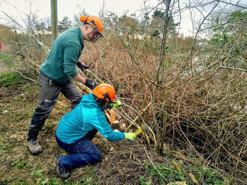 Volunteers cutting back brush